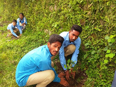 Tree Plantation at Village Chandrothi - Jattowala